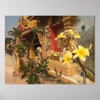 Frangipani in Thailand Poster