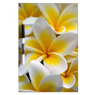 Frangipani Plumeria Flower Photo Dry Erase Board