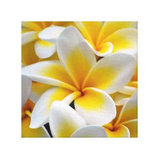 Frangipani Plumeria flowers Canvas Print