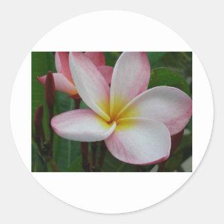 frangipanis-sandi-forjador pegatina redonda
