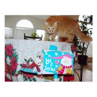 Frank&Leo: Did you see the cat? postctcard Postcard
