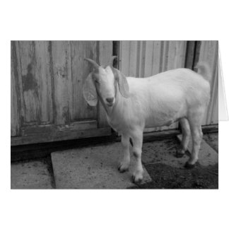 Frank the Goat in Black and White Cards