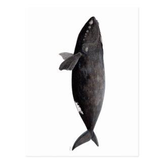 Frank whale of Atlantic Postcard