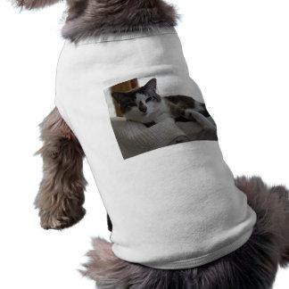 Frankie 5 ropa de perros
