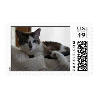 Frankie 5 stamp