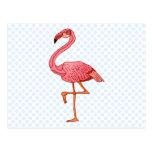 Franklin Flamingo Postcard