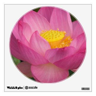 Franklin NC, jardín del agua de Perry, Lotus 2
