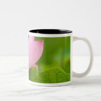 Franklin NC, jardín del agua de Perry, Lotus Taza De Café De Dos Colores