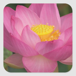 Franklin NC Perry s Water Garden Lotus 2 Stickers