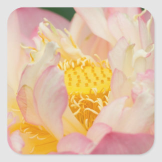 Franklin NC Perry s Water Garden Lotus with Sticker
