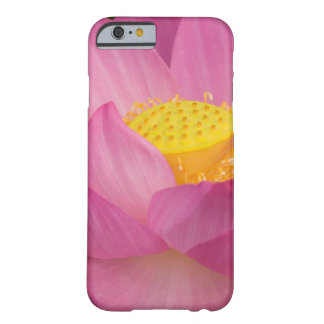 Franklin NC, Perry's Water Garden, Lotus 2 Barely There iPhone 6 Case
