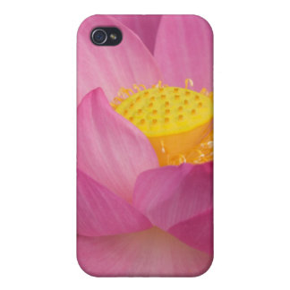 Franklin NC, Perry's Water Garden, Lotus 2 Case For iPhone 4