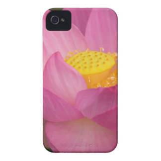 Franklin NC, Perry's Water Garden, Lotus 2 Case-Mate iPhone 4 Case