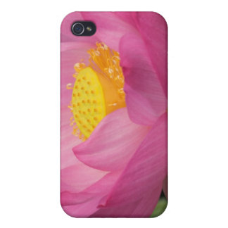 Franklin NC, Perry's Water Garden, Lotus 2 Cover For iPhone 4