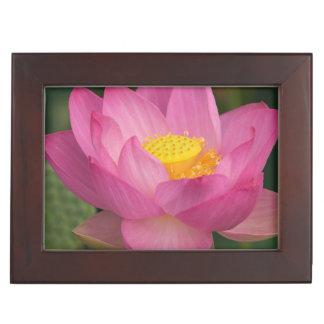 Franklin NC, Perry's Water Garden, Lotus 2 Keepsake Box