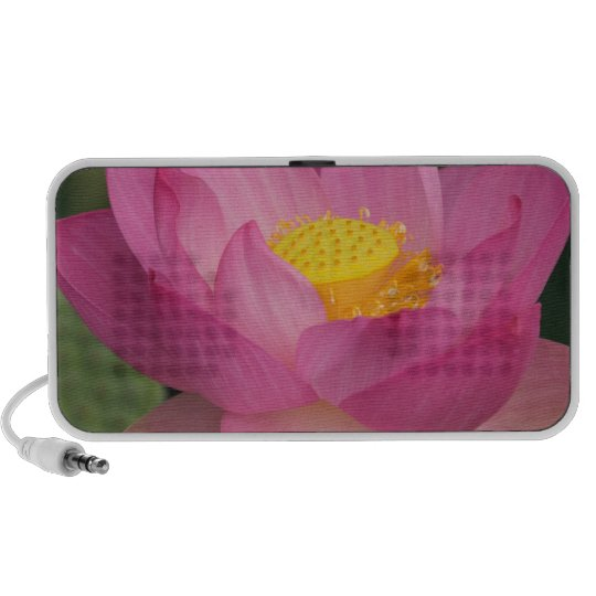 Franklin NC, Perry's Water Garden, Lotus 2 Mini Speaker