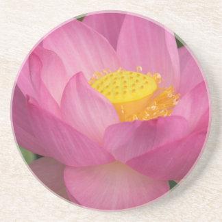 Franklin NC, Perry's Water Garden, Lotus 2 Sandstone Coaster