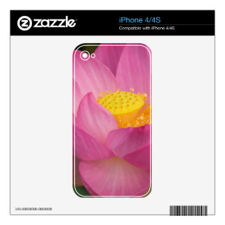 Franklin NC, Perry's Water Garden, Lotus 2 Skins For The iPhone 4S