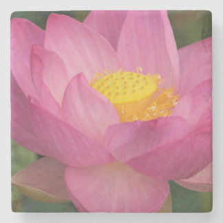 Franklin NC, Perry's Water Garden, Lotus 2 Stone Coaster