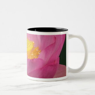 Franklin NC, Perry's Water Garden, Lotus 2 Two-Tone Coffee Mug
