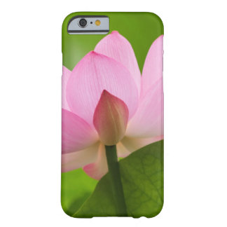 Franklin NC, Perry's Water Garden, Lotus Barely There iPhone 6 Case