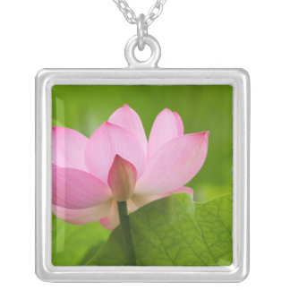 Franklin NC, Perry's Water Garden, Lotus Silver Plated Necklace