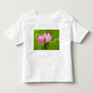 Franklin NC, Perry's Water Garden, Lotus Tees