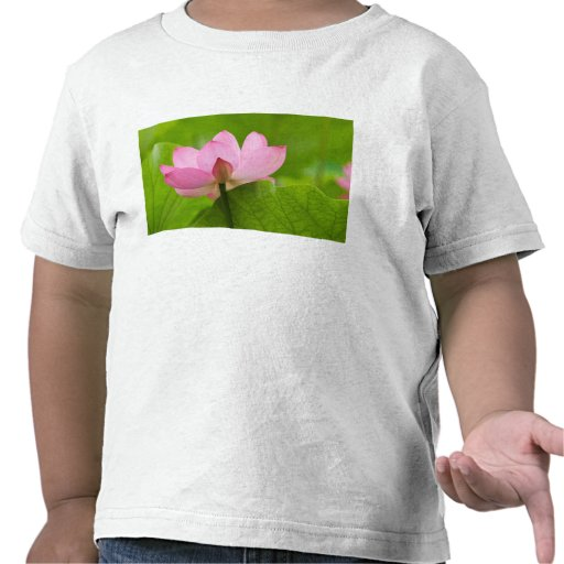 Franklin NC, Perry's Water Garden, Lotus Shirts
