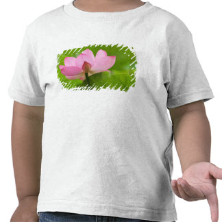 Franklin NC, Perry's Water Garden, Lotus T-shirts