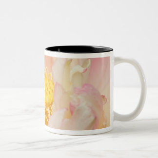Franklin NC, Perry's Water Garden, Lotus with Two-Tone Coffee Mug
