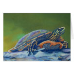 frank's turtle closeup stationery note card