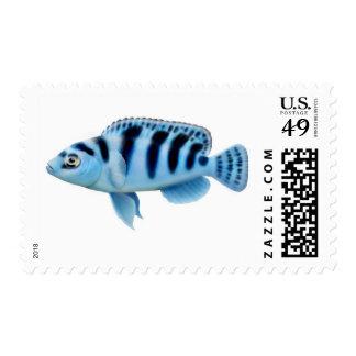Franqueo africano de los pescados de Cichlid de Estampilla