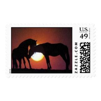 Franqueo - amante del caballo