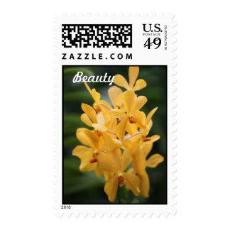 Franqueo amarillo de la belleza de la orquídea