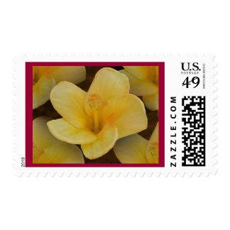 Franqueo amarillo delicado de la flor