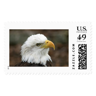 Franqueo americano de Eagle calvo Estampilla