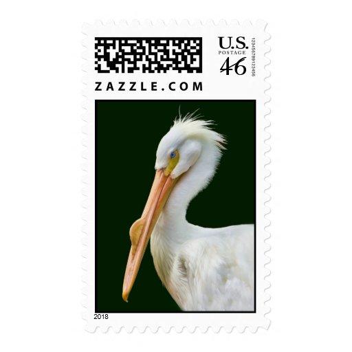 Franqueo americano del pájaro del pelícano blanco