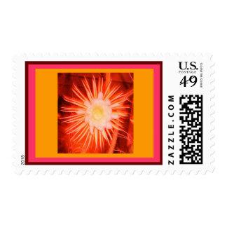 Franqueo anaranjado alterado de la flor del cactus