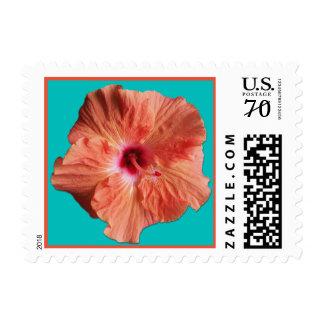 Franqueo anaranjado de la flor del hibisco