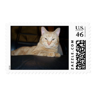Franqueo anaranjado del gato