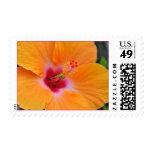 Franqueo anaranjado hawaiano del hibisco