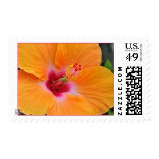 Franqueo anaranjado hawaiano del hibisco timbre postal