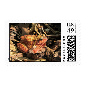 Franqueo anaranjado Stam de la rana [ Sello Postal