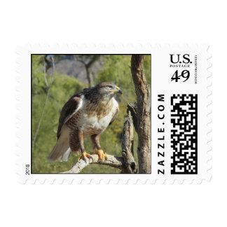 Franqueo atado rojo del halcón timbre postal