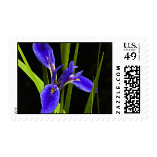 Franqueo azul del iris estampillas