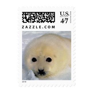 Franqueo blanco 063 del sello