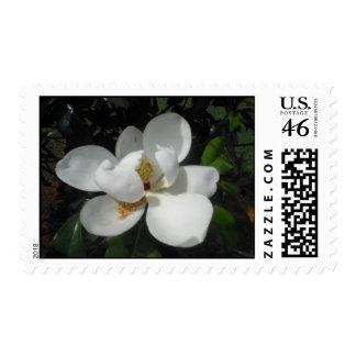 Franqueo blanco de la magnolia