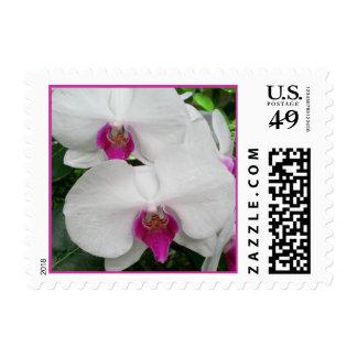 Franqueo blanco de la orquídea