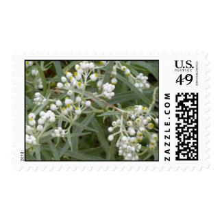 Franqueo blanco de los wildflowers