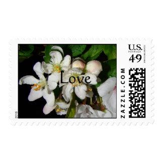 Franqueo blanco del amor de los flores